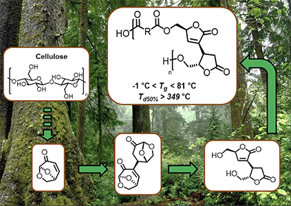 Sustainable synthesis and polycondensation of Levoglucosenone‐Cyrene™‐based bicyclic diol monomer: an access to renewable polyesters