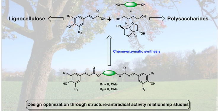 Structure−Activity Relationships and Structural Design Optimization of a Series of p‑Hydroxycinnamic Acids-Based Bis- and Trisphenols as Novel Sustainable Antiradical/Antioxidant Additives
