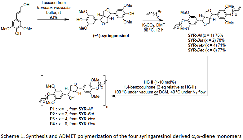 ADMET polymerization of biobased monomers deriving from syringaresinol