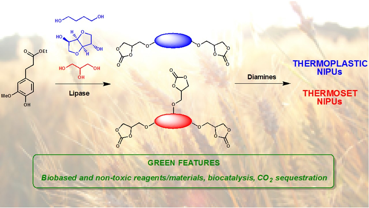 Chemo-Enzymatic Synthesis and Characterization of Renewable Thermoplastic and Thermoset Isocyanate-Free Poly(hydroxy)urethanes from Ferulic Acid Derivatives