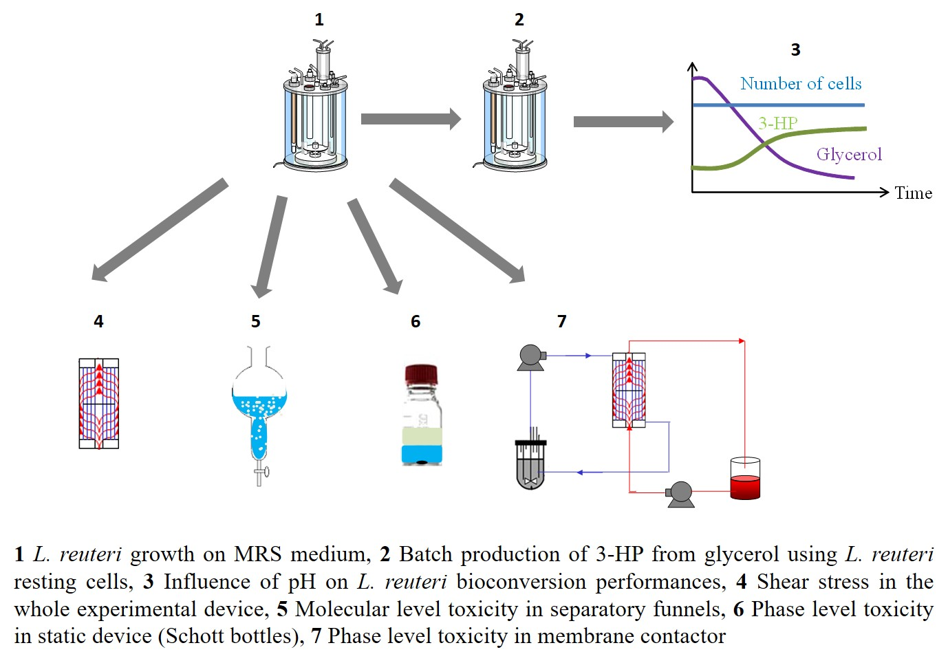 Towards an extractive bioconversion of 3-hydroxypropionic acid: study of inhibition phenomena