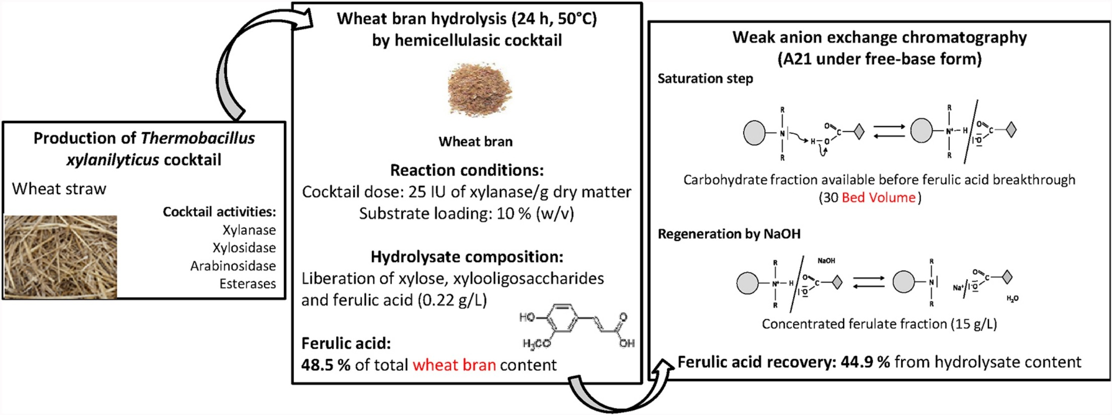 A novel and integrative process: From enzymatic fractionation of wheat bran with a hemicellulasic cocktail to the recovery of ferulic acid by weak anion exchange resin
