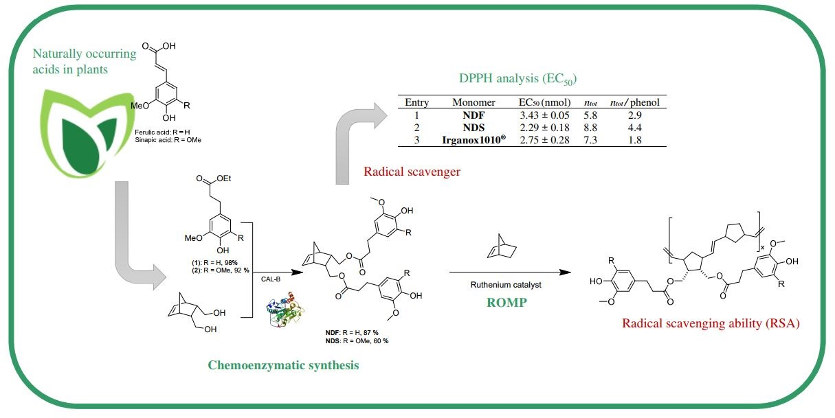 Biocatalytic Synthesis and Polymerization via ROMP of New Biobased Phenolic Monomers: A Greener Process toward Sustainable Antioxidant Polymers