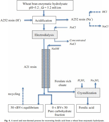 Recovering ferulic acid from wheat bran enzymatic hydrolysate by a novel and non-thermal process associating weak anion-exchange and electrodialysis
