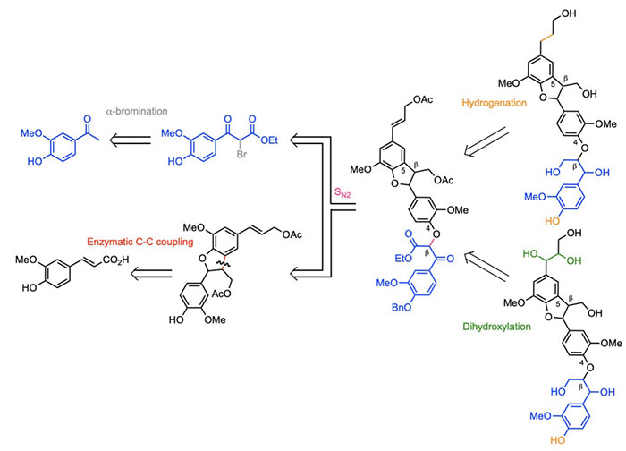 First Total Synthesis of (β-5)-(β-O-4) Dihydroxytrimer and Dihydrotrimer of Coniferyl Alcohol (G): Advanced Lignin Model Compounds