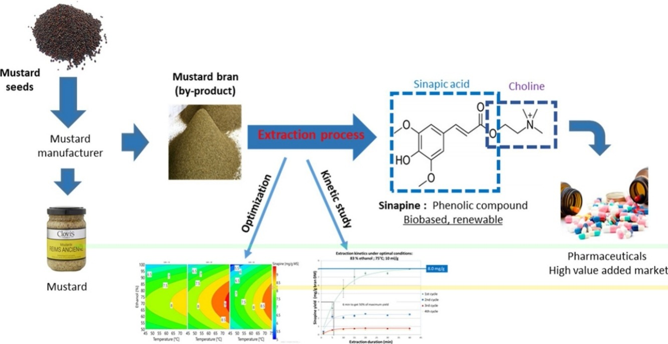Optimization of an ethanol/water based sinapine extraction from mustard bran using Response Surface Methodology